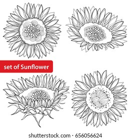 Vector set with outline open Sunflower or Helianthus flower isolated on white background. Floral elements in contour style with ornate Sunflowers for summer design and coloring book.