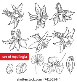 Vector set with outline ornate Aquilegia or Columbine flower, bud and leaf in black isolated on white background. Perennial flower Columbine in contour style for summer design and coloring book.