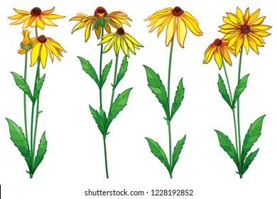 Vector set with outline Rudbeckia hirta or black-eyed Susan flower bunch, ornate green leaf and bud in yellow isolated on white background. Contour Rudbeckia flowers for summer design.