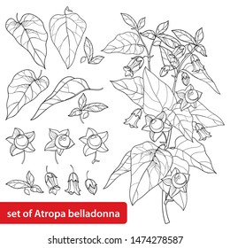 Vector set of outline toxic Atropa belladonna or deadly nightshade flower bunch, bud, berry and leaf in black isolated on white background. Poisonous contour Belladonna plant for coloring book.
