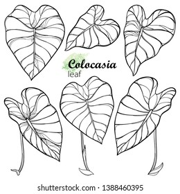 Vector set with outline tropical leaf of Colocasia esculenta or Elephant ear or Taro in black isolated on white background. Ornate contour Colocasia leaves for summer coloring book.