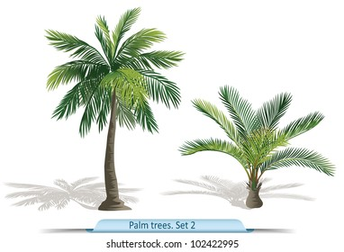 Vector set of palm trees. Part 2