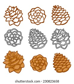 Vector set with pine cones isolated on white