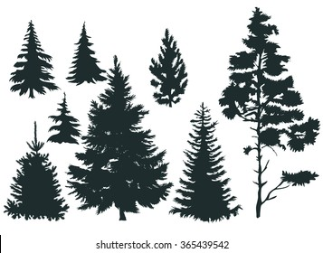 Vector set with pine trees isolated on white background