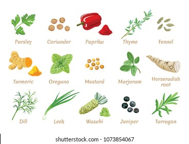 Vector set of popular spices. Juniper, Wasabi, Tarragon, Dill, Leek, Turmeric, Oregano, Mustard, Marjoram, Horseradish root, Parsley, Coriander, Paprika, Thyme, Fennel. Flat icon, tag, label.