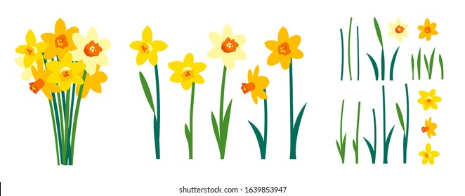 Vector set of positive floral illustrations isolated on white background. Early spring garden flowers. Yellow daffodils bouquet. Clip art for bright festive greeting card, poster, banner. Womens Day