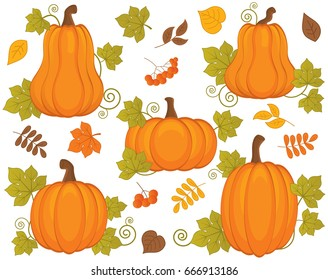 Vector set with pumpkin, berries and leaves. Vector Halloween and Thanksgiving. Pumpkin vector illustration.