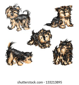 Vector set - puppies of breed a Yorkshire terrier