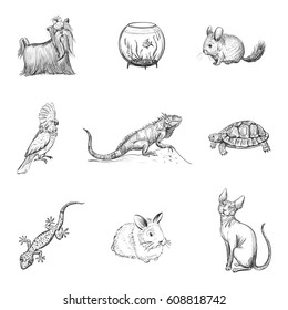Vector set of quality hand-drawn icons about pets. Isolated sketch on white background.