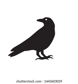 Vector set of ravens silhouettes in different poses isolated on white background