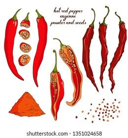 Vector set with red hot cayenne pepper. Fresh and dried pods, slices, seeds and powder. Spices. Elements for food design.