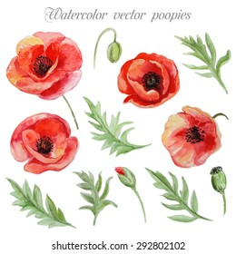 Vector set of red watercolor poppy flowers
