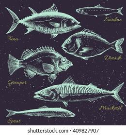 vector set of sea fish menu, shrimp, fish, dorado, mackerel, sprats, sardines,retro graphic line drawings, isolated object