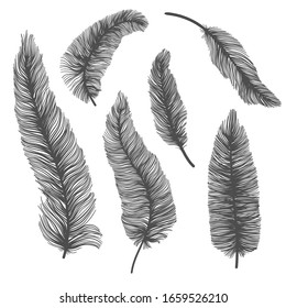 Vector set of silhouette of birds feather on isolated white background. Decorative feathers collection.