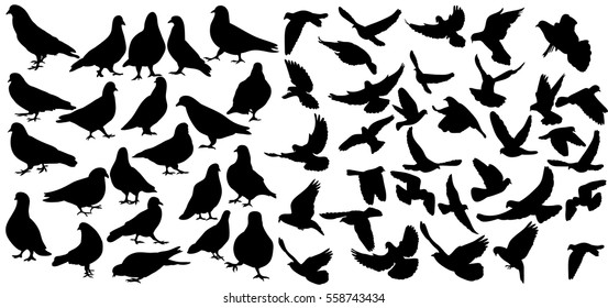 vector set of silhouette birds, pigeons, fly