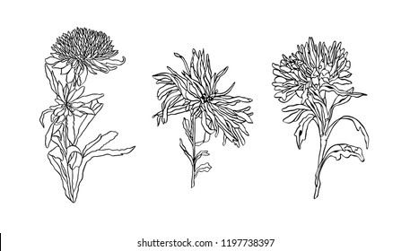 Vector Set of silhouette Flower Asters with leaves Art nouveau