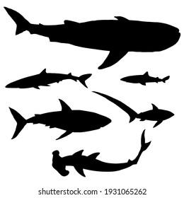 Vector Set of Silhouette Sharks. Different Types - Whale Shark, Blue Shark, Spurdog, Great White Shark, Thresher, Hammerhead.