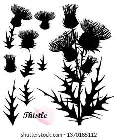 Vector set with silhouette of welted Thistle or Carduus plant, spiny leaf, bud and flower bunch in black isolated on white background. Symbol of Scotland. Contour Thistle for summer design.