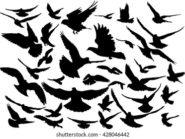 Vector set of silhouettes of 36 flying birds