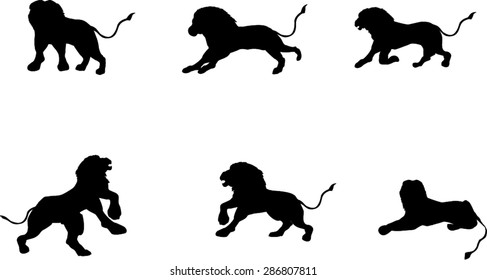 Vector set silhouettes of Lions in different poses,  isolated on white
