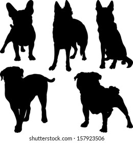 Vector set of silhouettes of pug, French bulldog, Shepherd, bullmastiff breeds of dogs in various poses
