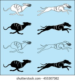 Vector set of silhouettes running dog whippet breed, in dog racing or coursing dress