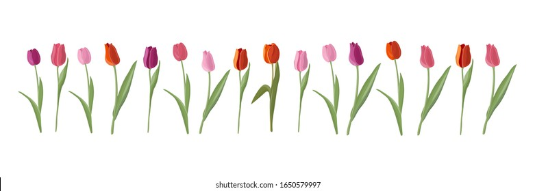Vector set of sixteen isolated tulips. Tulips of different colors in a flat style