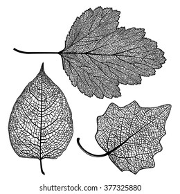 Vector set of skeletonized leaves on a white background. The graphic element may be used as a design background, business cards, postcards, etc.