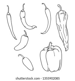 Vector Set of Sketch Chilli, Jalapeno and Paprika Peppers