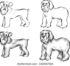 Vector set of sketch of dogs - Zwergschnauzer and old English Sheepdog