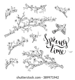 Vector set of spring branches isolated on white background. Blossoms, leaves, branches and bird contours. Hand-written brush lettering. Spring time. Coloring book elements template.