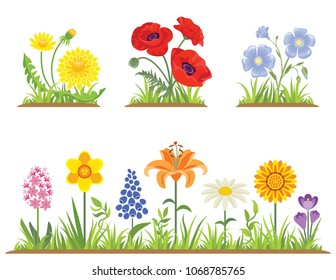 Vector set of spring and summer flowers with green grass in garden isolated on white. Illustration of flowers in bright colors in simple flat style. Poppy, daffodil, lily, chamomile, dandelion, flax.