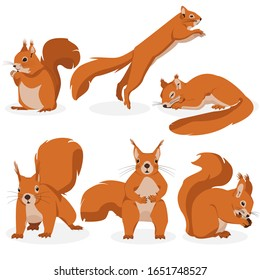 Vector set of squirrels in different poses. Illustration of squirrels with different emotions