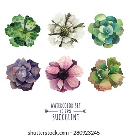 Vector set of succulents and flowers in watercolor style. Flowers poppies and succulents. Image for postcards, covers, invitations and other products.
