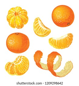 Vector set with tangerines isolated on white background.