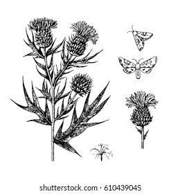 Vector set of thistle branches, flowers and butterflies.