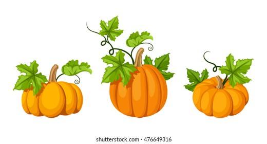 Vector set of three orange pumpkins and green leaves isolated on a white background.