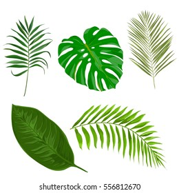 Vector set with tropical exotic leaves