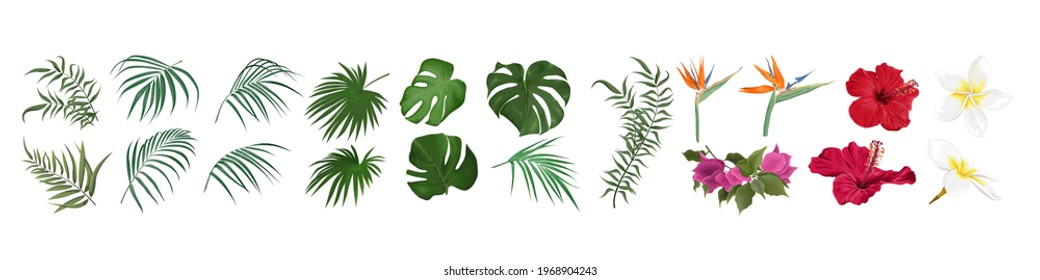 Vector set of tropical flowers and leaves. Hibiscus, monstera, palm leaves, bougainvillea, strelitzia, frangipani. Flowers and leaves on a white background.