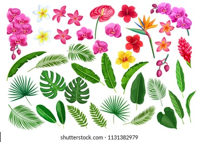 Vector set tropical leaves and flowers. Jungle exotic leaf philodendron, monstera, areca palm, royal fern and plumeria. Strelitzia, anthurium, hibiscus, orchid and ginger flower.