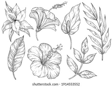 Vector set of tropical leaves. Tropical flowers and plants. Black and white