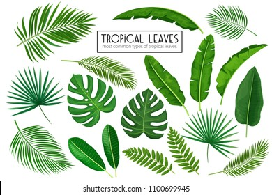 Vector set tropical leaves. Jungle exotic leaf philodendron, areca palm, royal fern, plumeria and etc. Illustration for summer tropical paradise advertising design vacation.