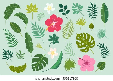 Vector set of tropical leaves. Palm, banana leaf, hibiscus, plumeria flowers.