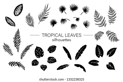 Vector set of tropical leaves silhouettes. Black drawing of jungle foliage. Hand drawn palm tree, banana, monstera, dieffenbachia, fern. Home tropic leaf clip art