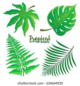 Vector set of tropical palm leaves isolated on white background. Vector illustration in hand drawn cartoon style. Can be used for design your website or print publications and other.