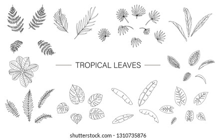 Vector set of tropical plant leaves. Line drawing of jungle foliage. Hand drawn palm tree, banana, monstera, dieffenbachia, Terminalia, fern, alocasia, cordyline. Home tropic leaf clip art