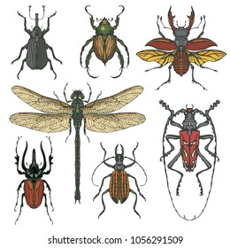 Vector set of various insects in retro style. Bugs, dragonfly and other beetles. Realistic collection of contour drawings of beetles. Vector illustration isolated on background