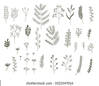 vector set of vegetative elements of abstract flowers and leaves. drawn doodles by hand. design graphics for the design of flyers, posters, cards, wedding invitations