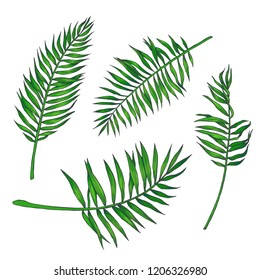 Vector set of vintage hand drawn palm leaves isolated on white. Botanical color illustration of branches of tropical plant in engraving style. Sketches of natural elements for floral design