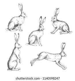 Vector set of vintage illustrations of hares isolated on white. Hand drawn sitting, standing and running rabbits in engraving style. Skecth of animals.